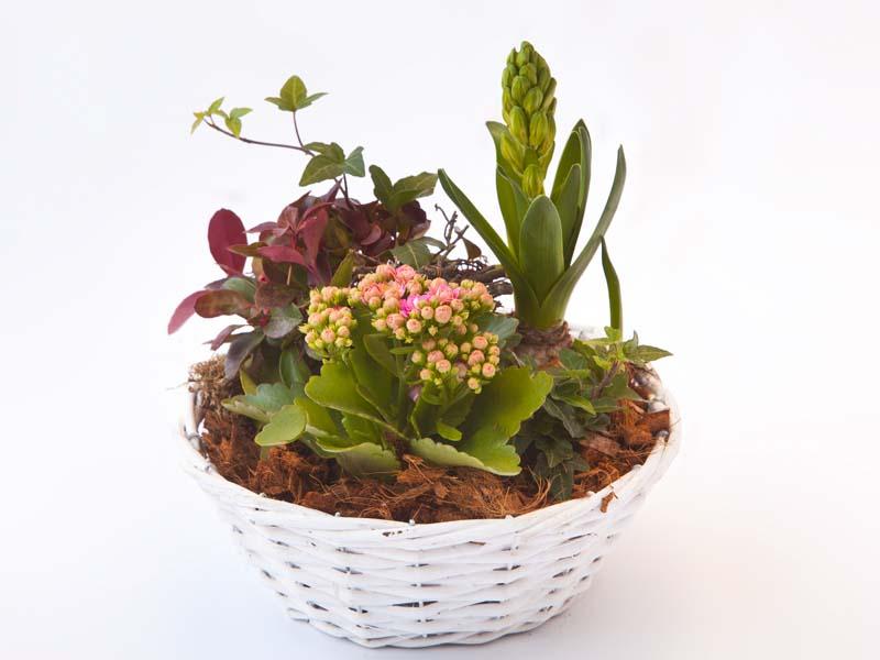 Plantarrangement