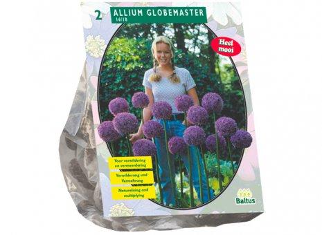 Allium globmaster