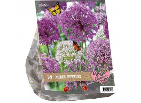 Allium mixed bubbels