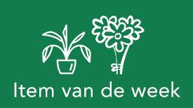 Boeket - plant van de week