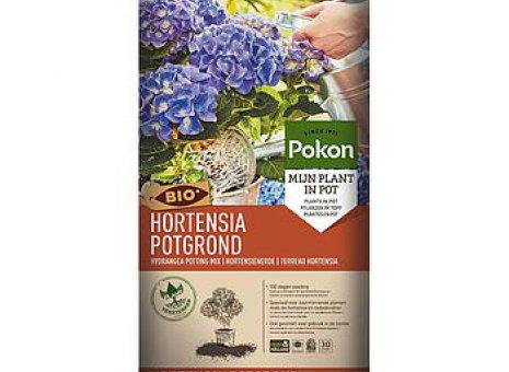 Potgrond hortensia