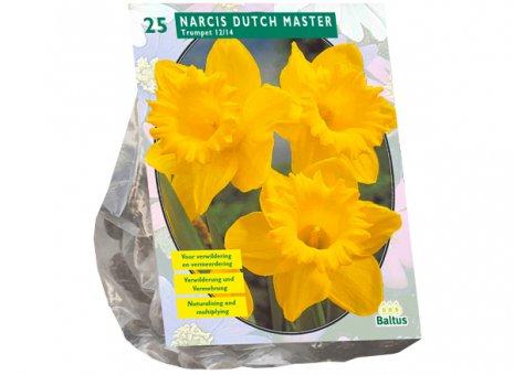 Narcis Dutch master