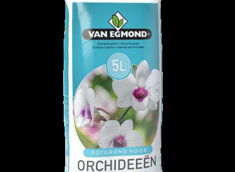 Potgrond orchidee