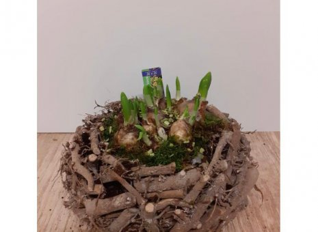 plantenarrangement Narcis
