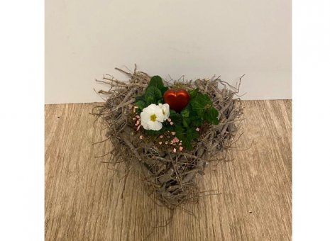 planten arrangement primula