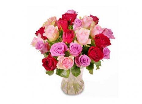 Rozen rood/roze