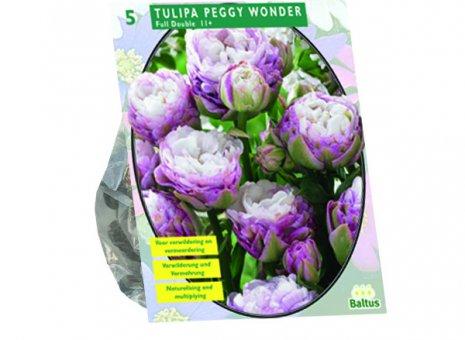 Tulipa Peggy wonder